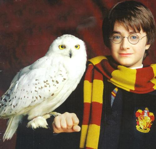 hedwig and harry
